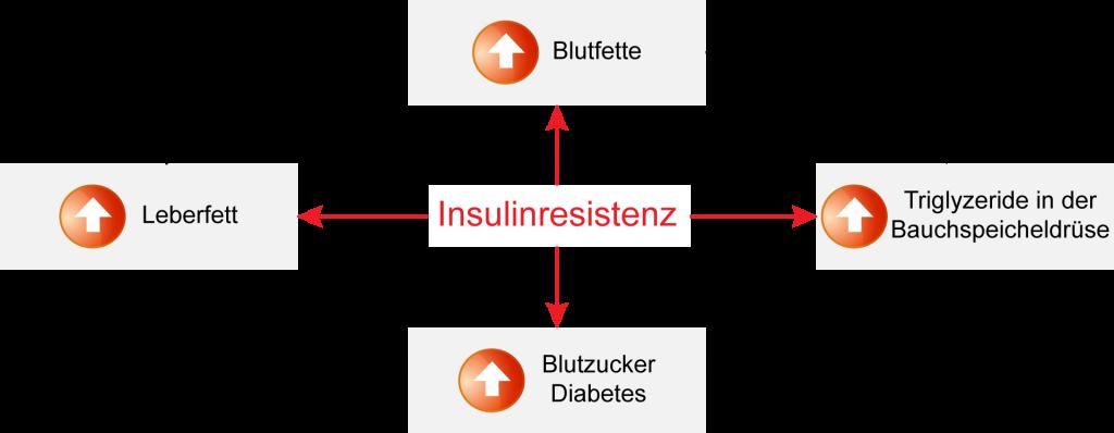 Insulinresistenz begünstigt erhöhten Blutzucker, Leberfette, Blutfette und Triglyzeride in der Bauchspeicheldrüse. Ein Teufelskreis, der Diabetes auslösen kann.